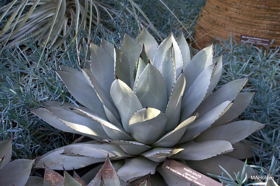 gray-cactus-mark-holden.jpg