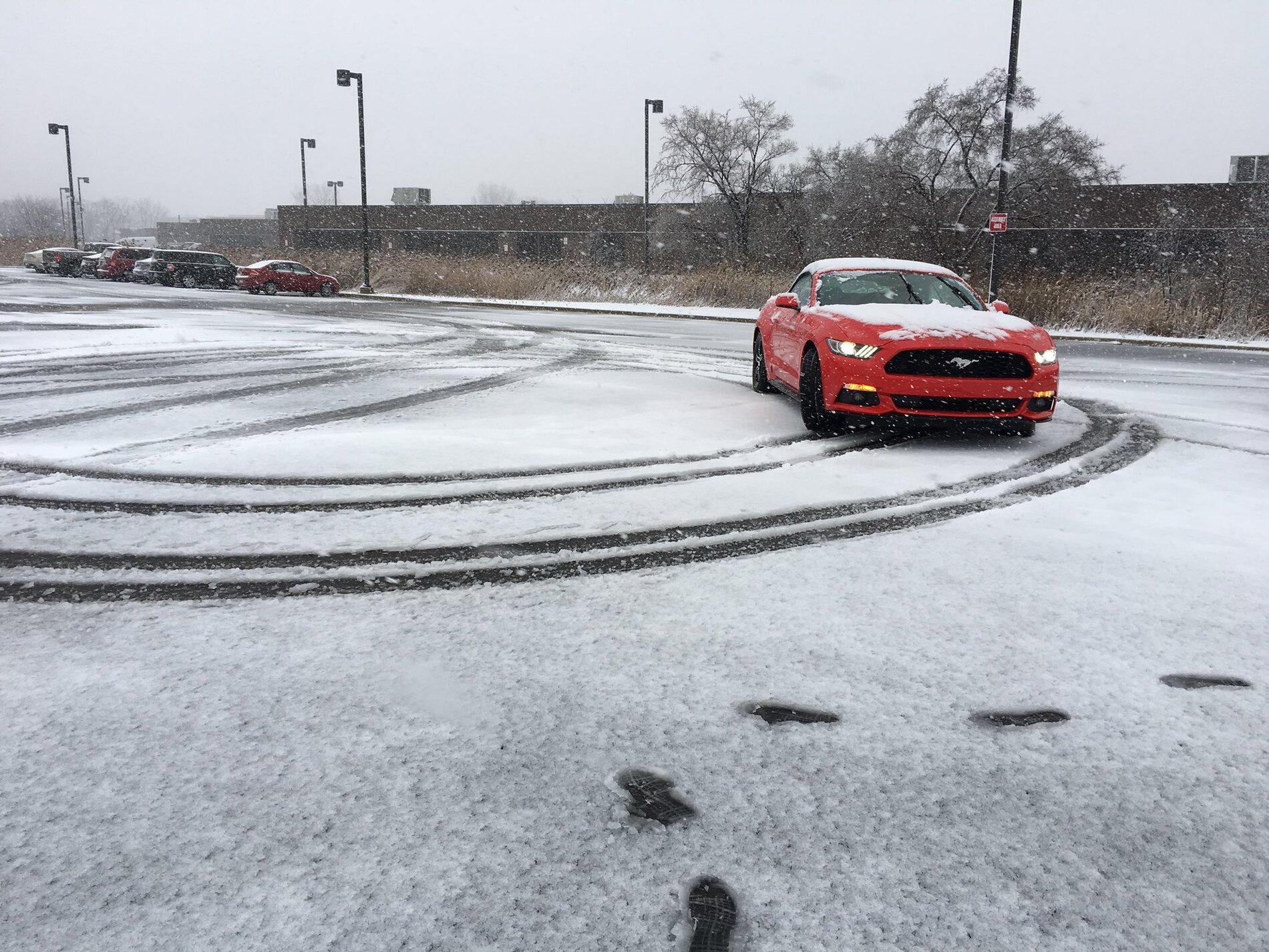 Mustang in the snow.jpeg